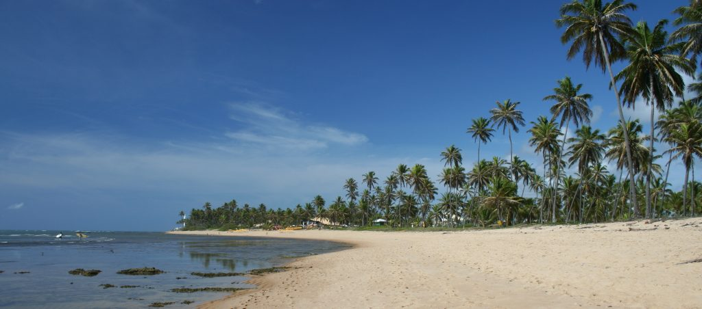 Praia do forte lined with coconut palms stretches far along the coast.