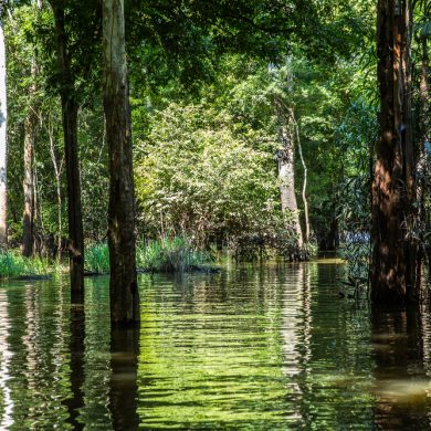 Swamp and trees on the Amazon.
