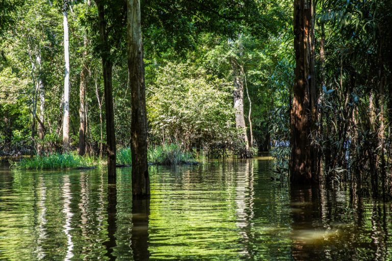 One of the many flooded forests that exist in the Amazon during the rainy season.