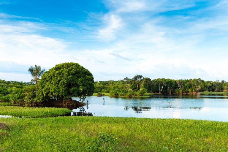 A lake in the Amazon dotted with lush green islands.
