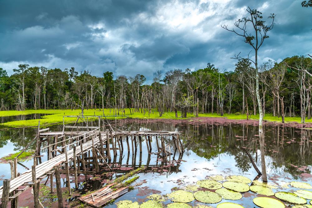 Pantanal during the rainy season.