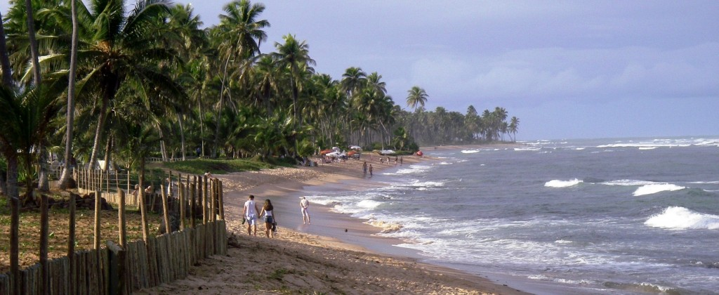 view of the ocean and coconut trees