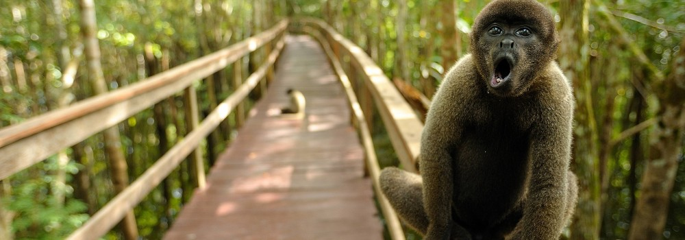 A monkey sitting on one of the walkways at Juma lodge.