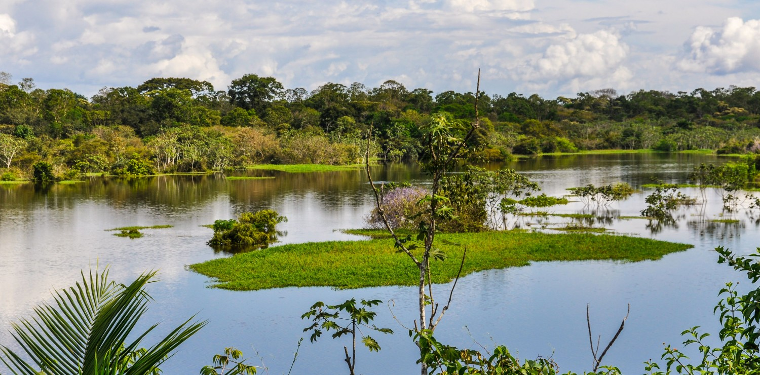View of Amazon Brazil