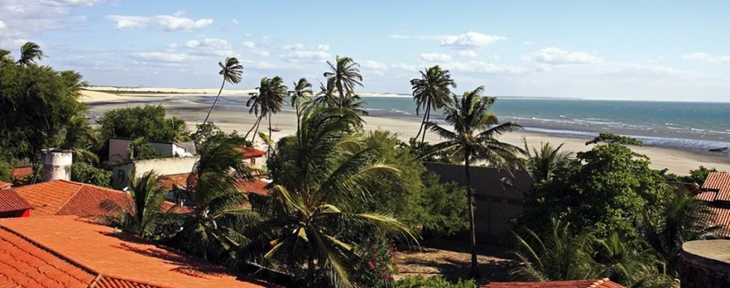 The wind blows through the palm trees on the Nordeste coast.