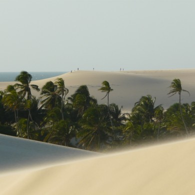 Dunes in Jericoacoara and coconut palms in the background.