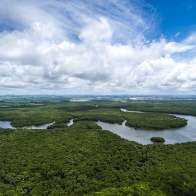 Amazon river meanders through forest.