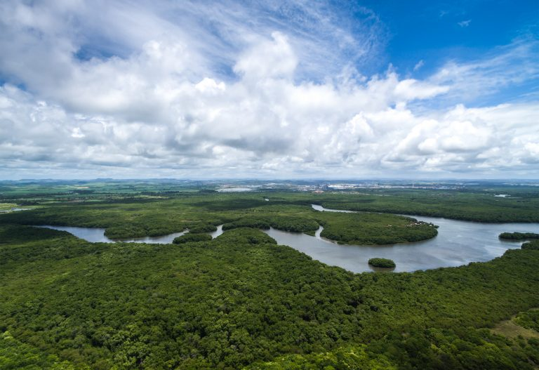 The Amazon river winding its way through the jungle.