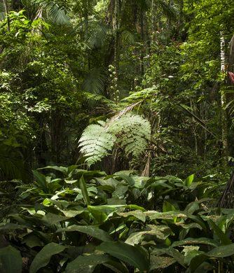 Amazonie Végétation luxuriante
