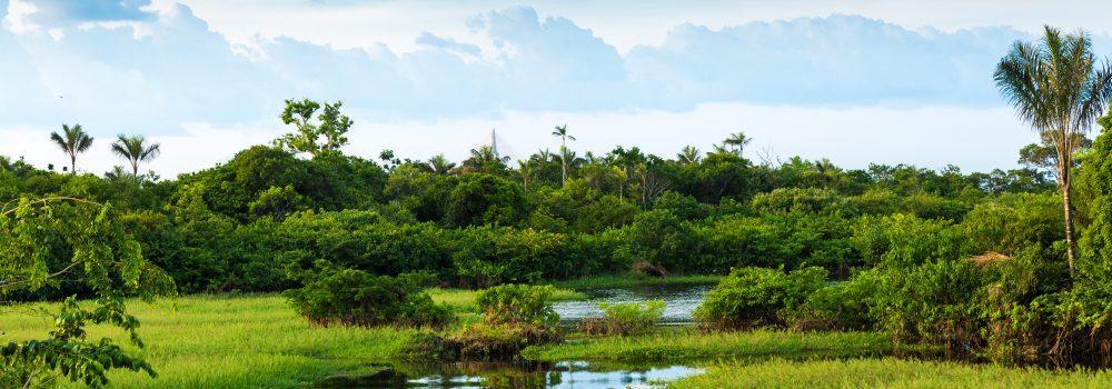 The swampy wetlands of Pantanal.