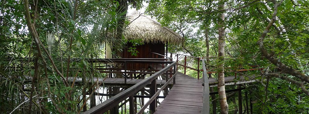One of the walkways amongst the tree canopy at the Juma lodge in the Amazon.