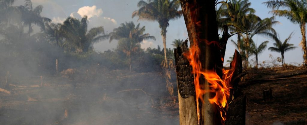 Amzon rainforest fire