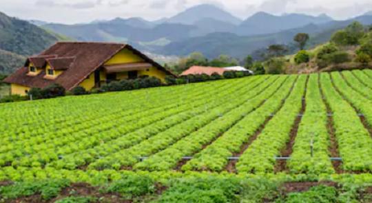 Agricultural farm near Rio de Janeiro.